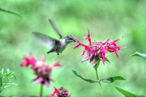 Hummingbird 2 by Robert Goldwitz