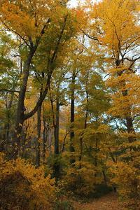 Inwood Park Fall Vertical by Robert Goldwitz