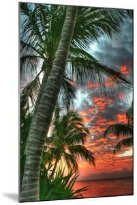 Key West Palm Sunrise Vertical by Robert Goldwitz