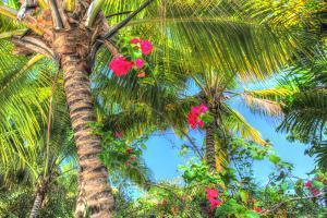 Key West Pink Flowers Palm by Robert Goldwitz