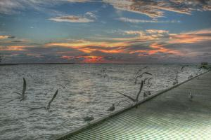 Key West Sunrise Gulls and Pier by Robert Goldwitz
