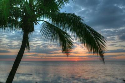 Key West Sunrise One Palm by Robert Goldwitz