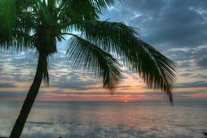 Key West Sunrise One Palm by Robert Goldwitz