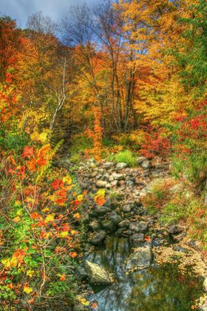 Low Water Brook Autumn by Robert Goldwitz