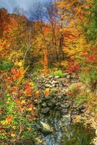 Low Water Brook Autumn by Robert Goldwitz