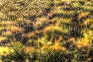 Morning Web by Robert Goldwitz