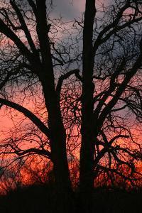 November Sunset Vertical by Robert Goldwitz