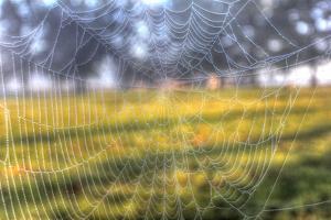 Paddock Web by Robert Goldwitz
