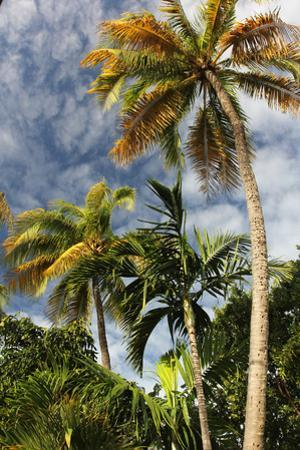 Palms Sky Vertical by Robert Goldwitz