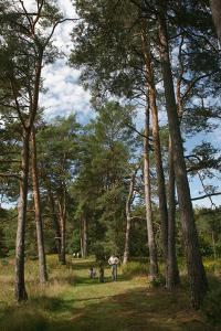 Pine Path Vertical by Robert Goldwitz