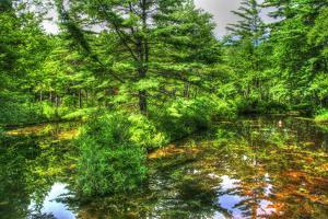 Pine Pond Reflection by Robert Goldwitz