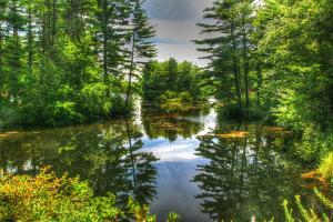 Pond and Pines by Robert Goldwitz
