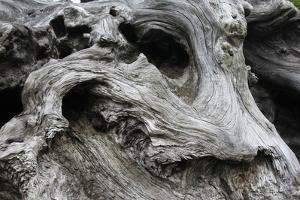Redwood Root Driftwood by Robert Goldwitz