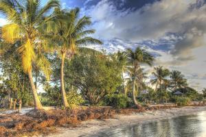 Rest Beach Foliage by Robert Goldwitz