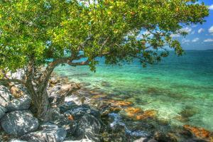 Rocky Shore Tree by Robert Goldwitz