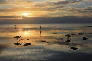Sea Birds Low Tide by Robert Goldwitz