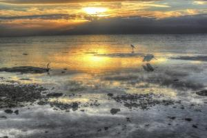 Sea Birrd Low Tide 2 by Robert Goldwitz
