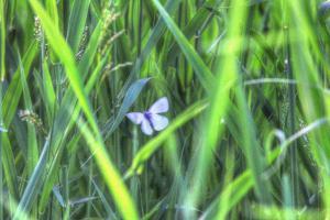 Splendor in the Grass by Robert Goldwitz