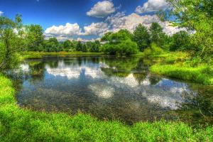 Summer Pond by Robert Goldwitz
