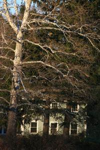 Sycamore House Vertical by Robert Goldwitz
