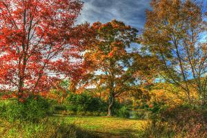 Tillson Lake Trees by Robert Goldwitz