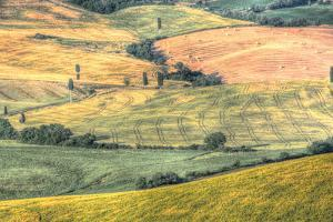 Tuscan Field Patterns by Robert Goldwitz
