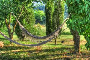 Tuscan Hammocks and Cat by Robert Goldwitz