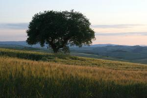 Tuscan Hillside by Robert Goldwitz