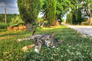 Tuscan Sleepy Cat by Robert Goldwitz