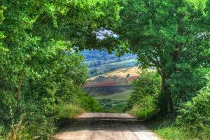 Tuscan Tree Tunnel by Robert Goldwitz