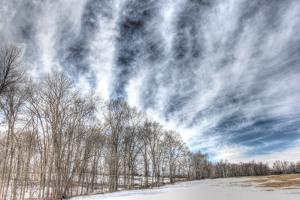 Winter Treeline by Robert Goldwitz