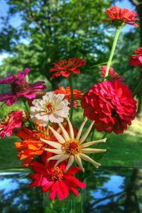 Zinnia Bouquet by Robert Goldwitz