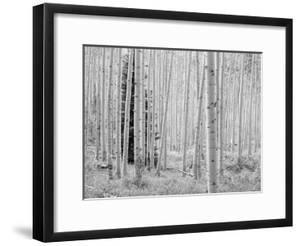 Aspen Black and White 1 by Robert Hansen