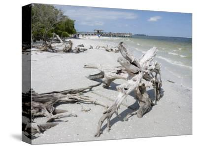 Driftwood on Beach with Fishing Pier in Background, Sanibel Island, Gulf Coast, Florida