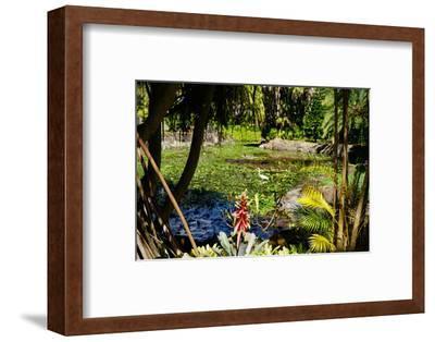 Nevis Botanical Garden, Nevis, St. Kitts and Nevis