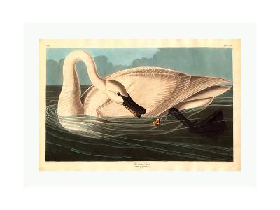 Robert Havell after John James Audubon--Giclee Print