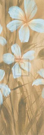 White Hibiscus II