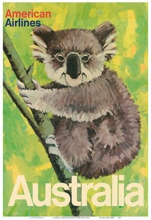 Australia - Koala Bear In Tree - American Airlines