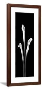 Calla Lilies on Black II by Robert Jones