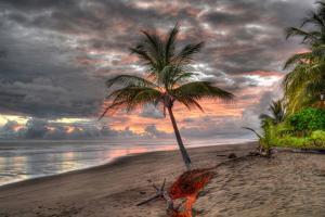 Palm Tree by Robert Kaler