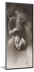Silver Back, the Gorilla by Robert L^ Caldwell