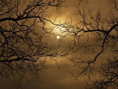Branches Surrounding Harvest Moon