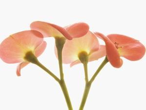 Flowers by Robert Llewellyn