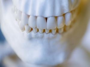 Skeleton teeth by Robert Llewellyn