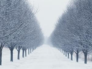Tree-lined Road in Winter by Robert Llewellyn