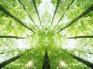 Trees in Forest Ascending by Robert Llewellyn