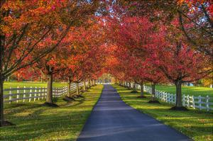 Lane in Fall by Robert Lott