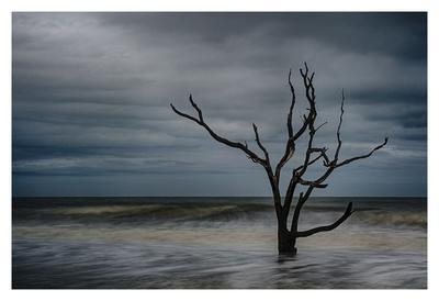 Tree on Botany Bay