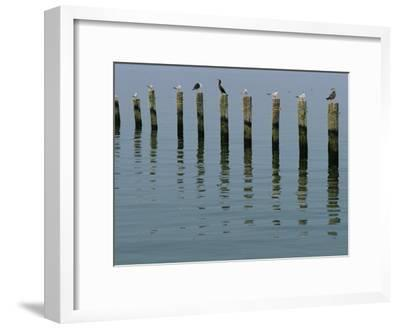 Gulls Perched on Pilings