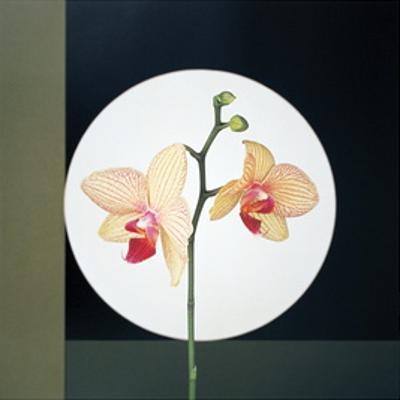Orchids (1988)